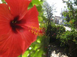 08_vivian_studios_garden